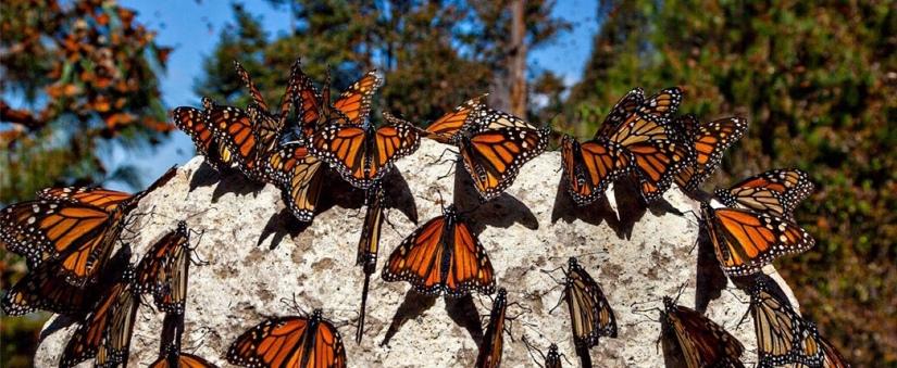 I Have SeenButterflies
